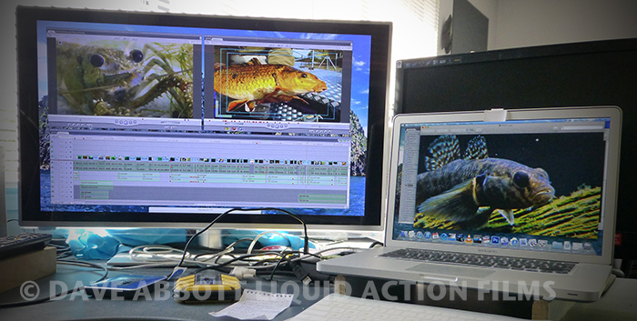 Liquid Action Films edit suite, © Dave Abbott