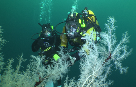 divers in Fiordland with Black coral trees,© Dave Abbott, Liquid Action Films
