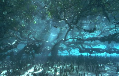 flooded Mangrove forest bathed in sunlight, © Dave Abbott, Liquid Action Films