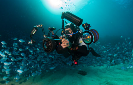Dave Abbott filming underwater at the Poor Knights Islands among a school of Blue Maomao.