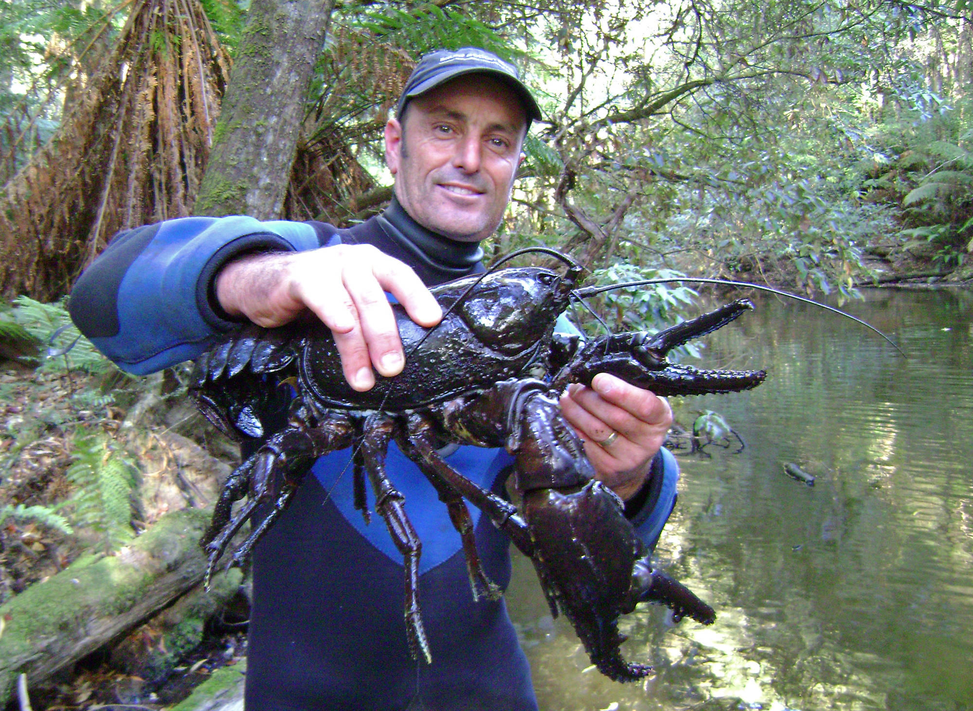 Underwater cameraman Dave Abbott holds up a Giant freshwater lobster while on a filming assignment